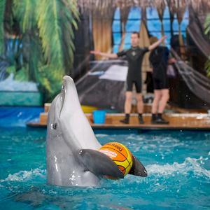 Дельфинарии, океанариумы Новокуйбышевска