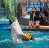 Дельфинарии, океанариумы в Новокуйбышевске